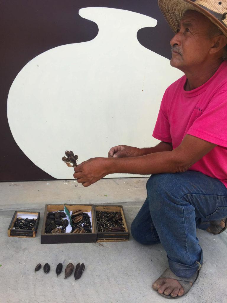 Agave Seeds at Mezcal Real Minero