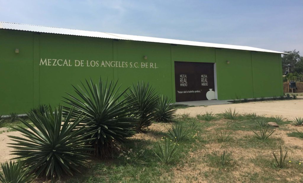 Mezcal Real Minero nursery and bottling center in Santa Catarina Minas