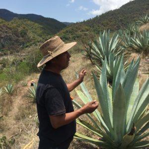 Cinco Sentidos Alberto Martinez Mezcalero
