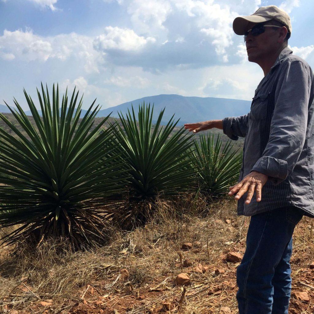 Agave Karwinskii in Ejutla, Oaxaca, Mexico