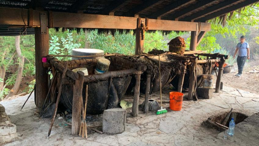 Rawhide Bovine Fermentation Amando Alvarez 5sentidos Cinco Sentidos5